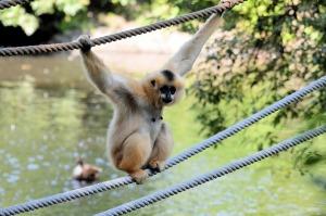 monkey-315130_640